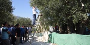 Zeytin Sezonunu Anıt Ağacı açtı